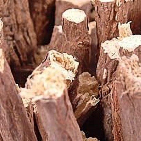 Liquorice Wood